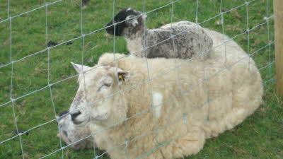 Moorhaven Farm, PL15 9RL, Launceston, Cornwall