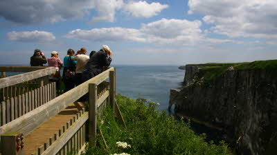 Offer image for: RSPB Bempton Cliffs - Free entry for two adults and two children