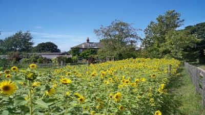 Millers Farm, EX5 2RE, Ottery St Mary, Devon