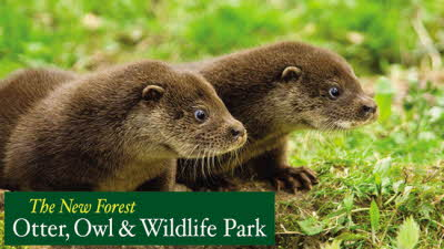 Offer image for: New Forest Wildlife Park - One free child when accompanied by one full paying adult