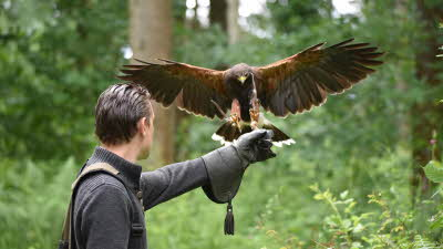 Offer image for: Wye Valley Falconry - 5% discount