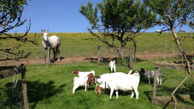 Rose Coombe Farm, EX13 8SY, Seaton, Devon