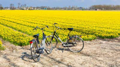 Cycling in the Netherlands