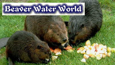 Offer image for: Beaver Water World - Two for the price of one