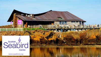 Offer image for: Scottish Seabird Centre - One free child when accompanied by one full paying adult
