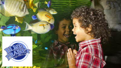 Offer image for: Blue Planet Aquarium - One child admitted for just £1