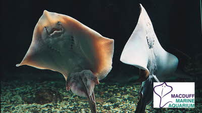 Offer image for: Macduff Marine Aquarium - One free child when accompanied by one full paying adult