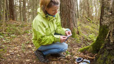 Woman finding geocache in forest