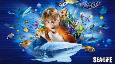 Offer image for: Scottish Sea Life Sanctuary - Pre-booking required online up to 41% discount