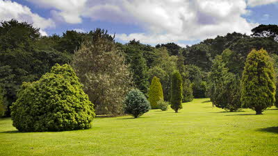 Offer image for: Pinetum Gardens - 2 for the price of 1 entry