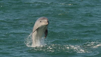 Offer image for: Dolphin Spotting Boat Trips - 20% discount on tours.