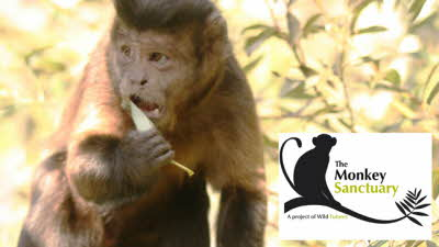 Offer image for: The Monkey Sanctuary - £1.00 off Adult tickets