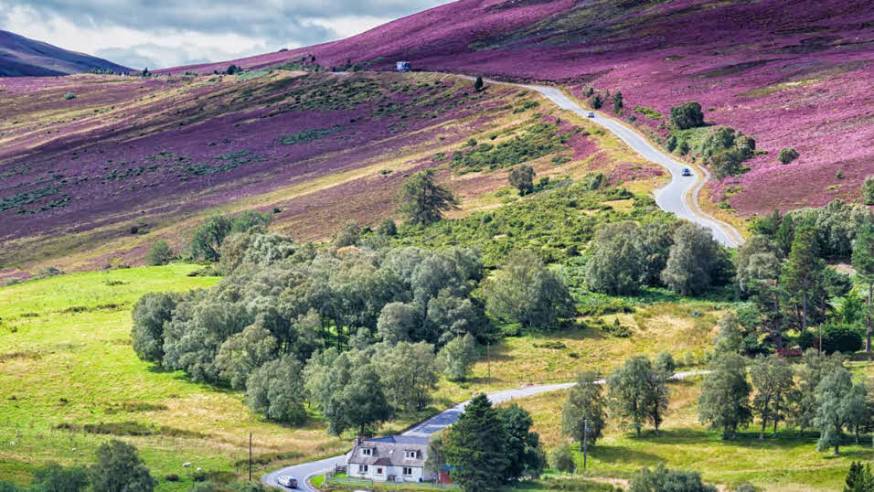 Purple and green rolling hills in the Cairngorms National Park
