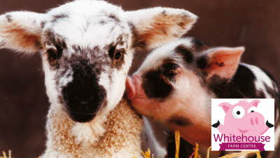 Offer image for: Whitehouse Farm Centre - Two for the price of one
