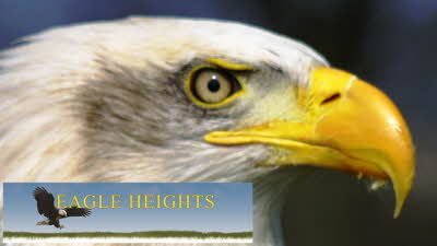 Offer image for: Eagle Heights Wildlife Foundation - 10% off entrance tickets.