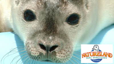 Offer image for: Skegness Natureland Seal Sanctuary - 10% off full price admission