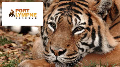 Offer image for: Port Lympne Hotel & Reserve - 20% off Day Ticket Park Entry