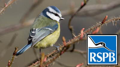 Offer image for: RSPB Conwy - Free entry for two adults and two children