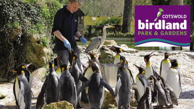 Offer image for: Birdland Park & Gardens - Save 10% off adult and child admission