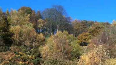 Warren CL, LL16 4DT, Denbigh, Denbighshire, Wales
