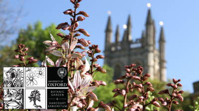 Offer image for: University of Oxford Botanic Garden - Two for one on entry to persons producing a valid voucher.