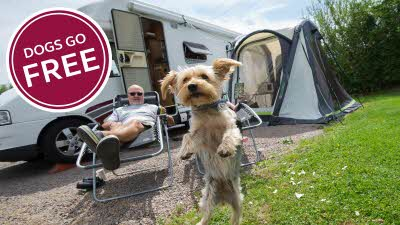 Terrier dog jumping in front of owner outside his motorhome