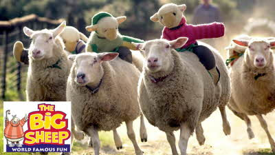 Offer image for: The BIG Sheep Family Attraction - Two for the price of one with one full paying person.